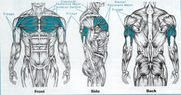 Exercitii pentru piept - Masa Musculara