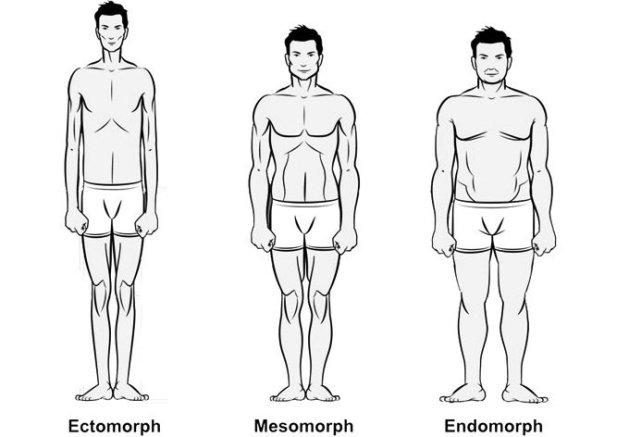 ectomorf