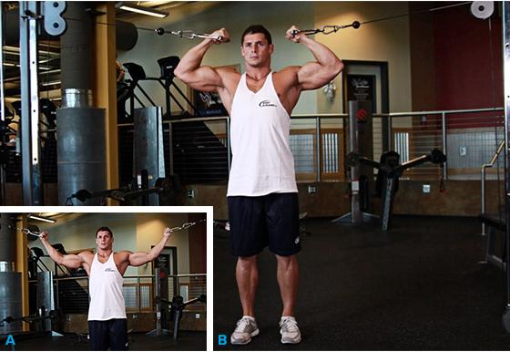 Exerciții Biceps  - Masă Musculară