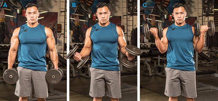 Exerciții pentru Masă Musculară